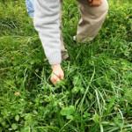 BP_pampaarenosa_ficha1_Agroecología aplicada a sistemas productivos extensivos