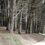 BP_pampaarenosa_ficha3_fijacion de medanos con forestales2