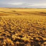 BP_ Mesetacentral_Ficha1_Evaluación forrajera de pastizales naturales por método Santa Cruz y planificación del pastoreo utilizando cargas continuas flexibles